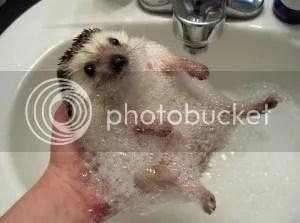 uh..yey!! segar bugar korang dah mandi ke belum?