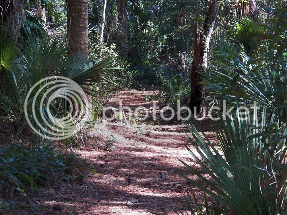 photo efs-path1.jpg