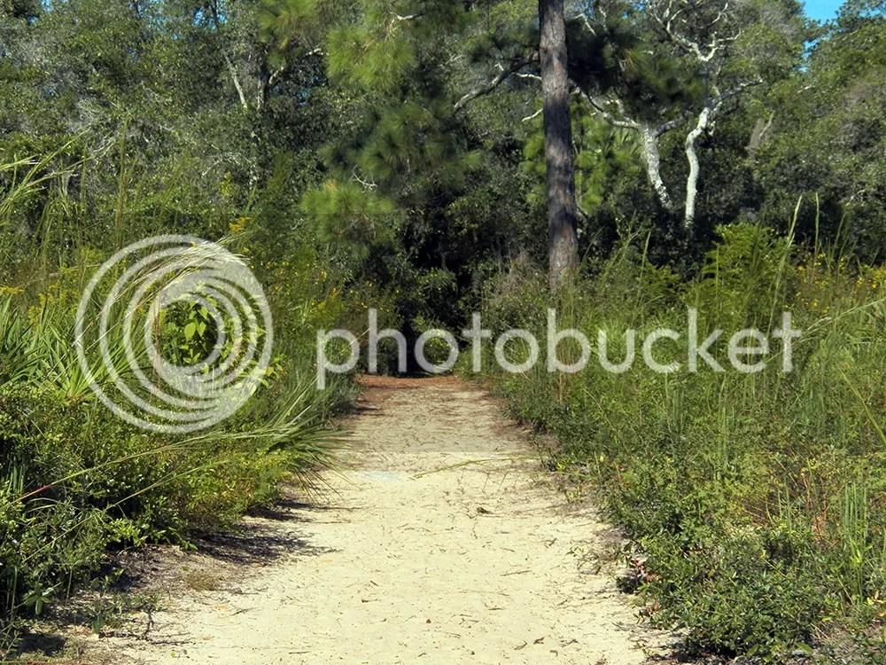 photo efs-path2.jpg
