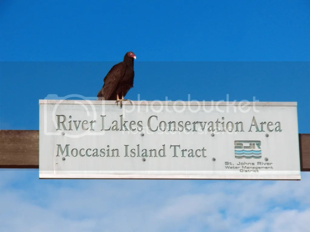 photo turkey-vulture-sign.jpg