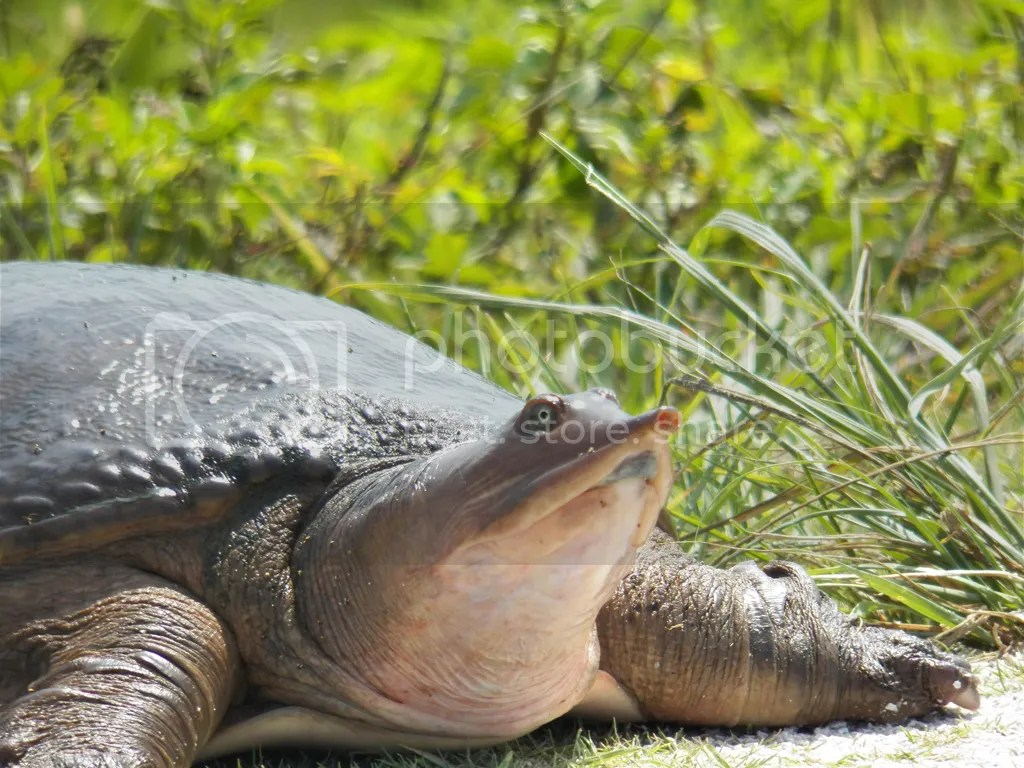photo turtle.jpg