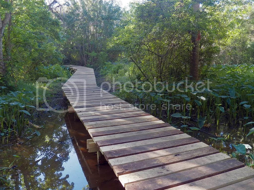 photo flood-plain-boardwalk1.jpg