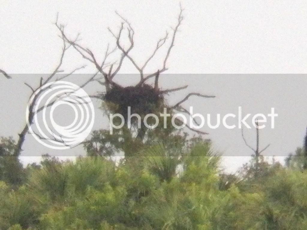 photo distant-eagle-nest.jpg