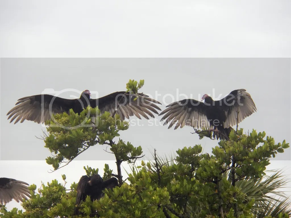 photo vultures-spread.jpg