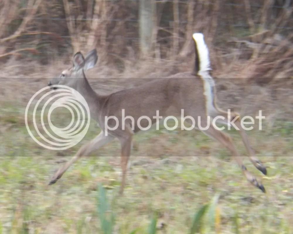 photo deer2.jpg