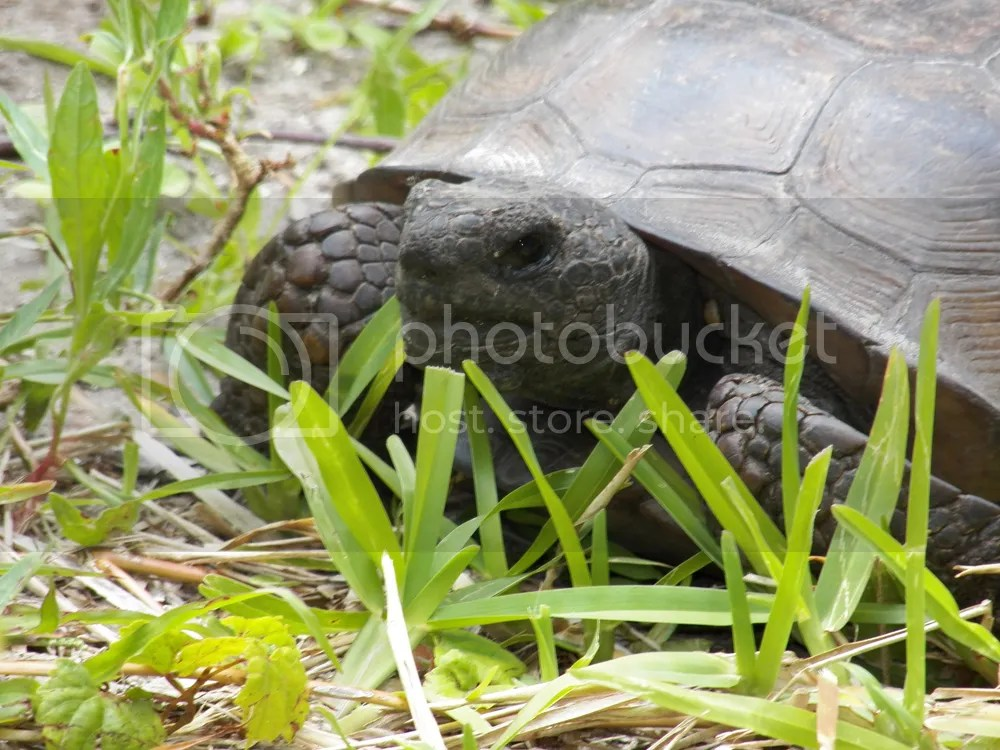photo tortoise-close-up.jpg