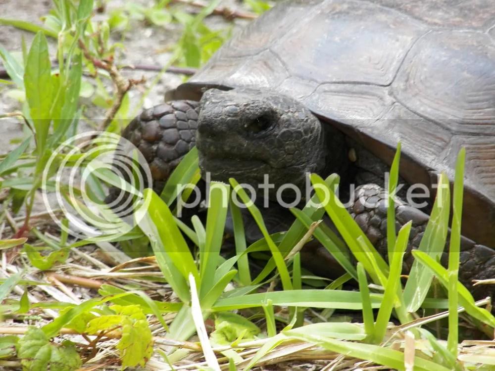 photo tortoise-close-up.jpg