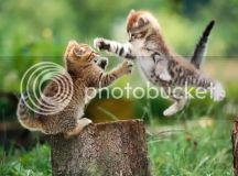 Funny Kittens! Photo by TheLolPics | Photobucket