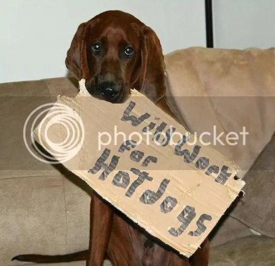 Unemployed dog