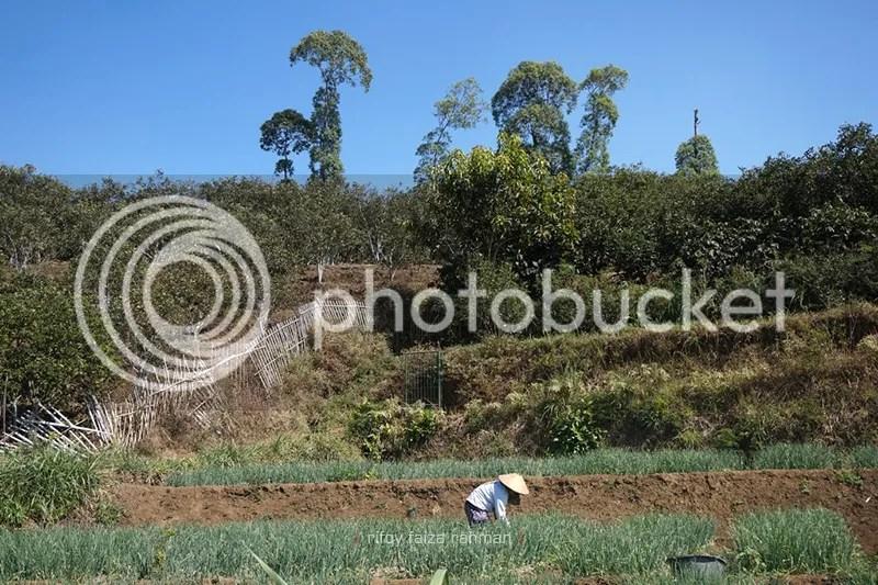 Regenerasi petani menjadi hal yang patut diperhatikan untuk keberlanjutan pertanian
