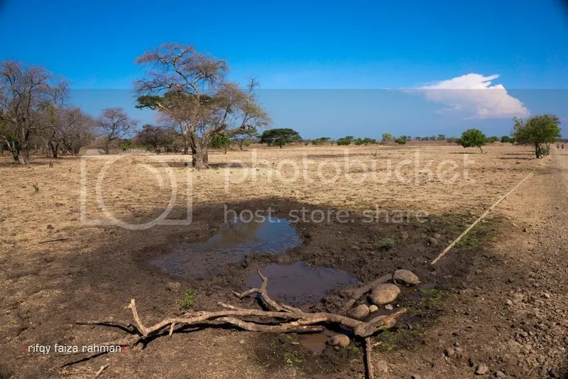 Kubangan air di kawasan sabana Bekol, Taman Nasional Baluran. Salah satu sumber tadah hujan untuk kebutuhan minum satwa Baluran.