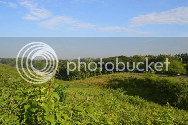 Nampak hijau rerumputan dan pepohonan membentang di sekitar waduk Gondang