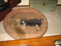 Quality Dog Beds???? - German Shepherd Dog Forums