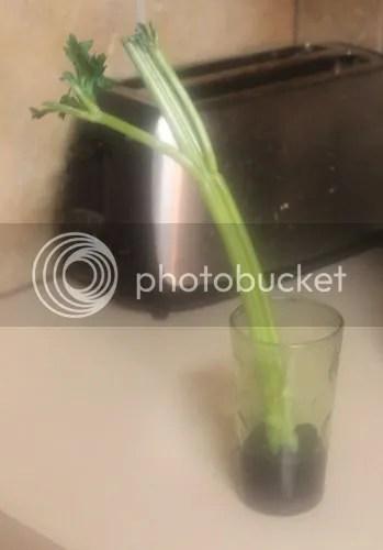 Blue Celery