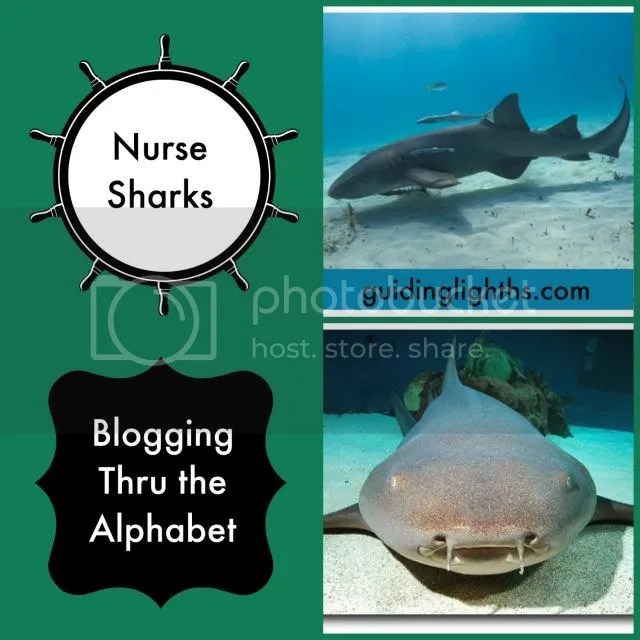 photo NurseSharkCollage_zps08889ce3.jpg
