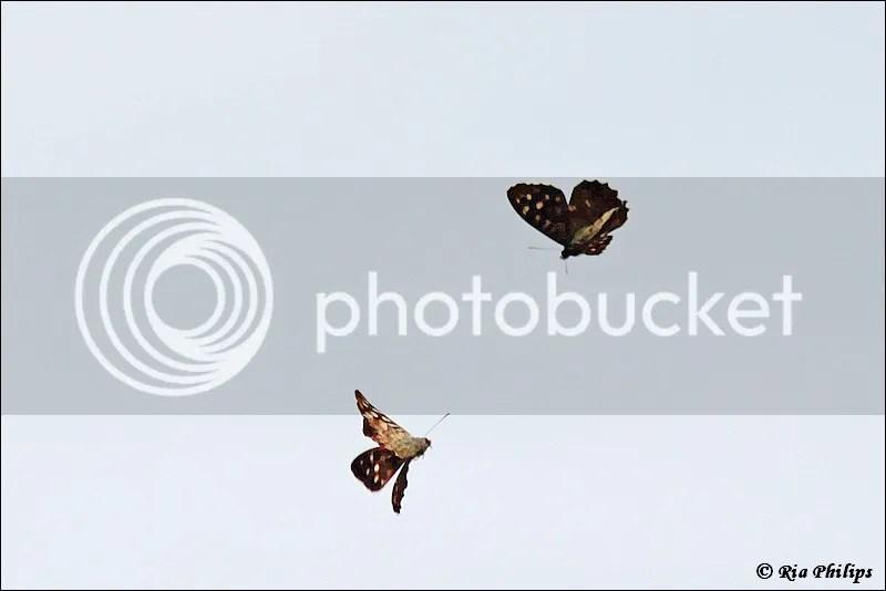 photo IMG_8698.jpg