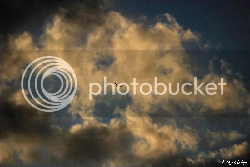 photo a6b8c276-8527-43e7-b0d4-bc08038aaef3.jpg