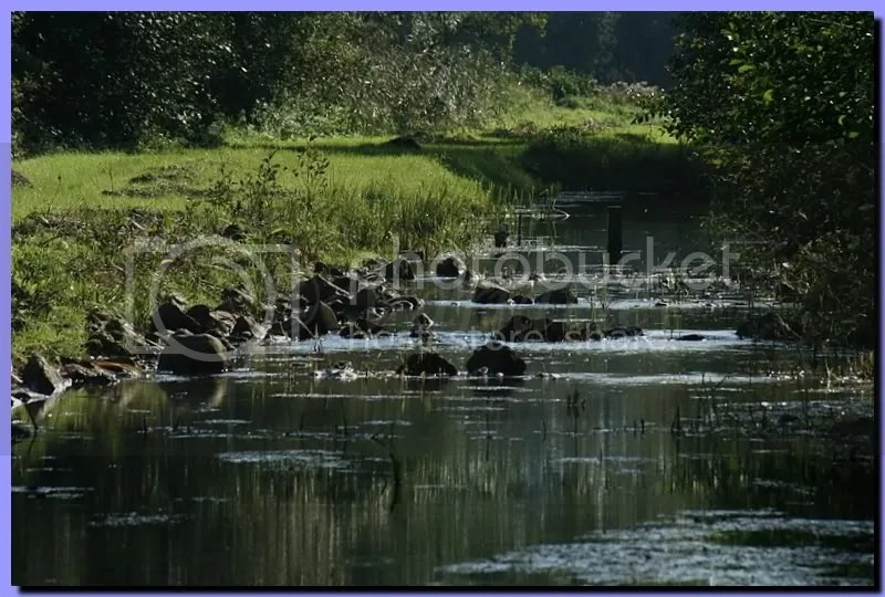 IMG_3930.jpg picture by bathmen