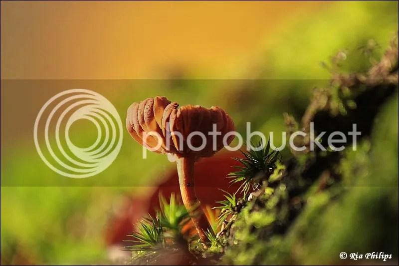 photo IMG_9480.jpg