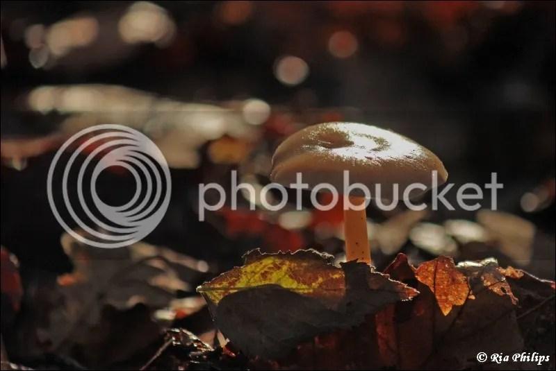 photo IMG_9484.jpg
