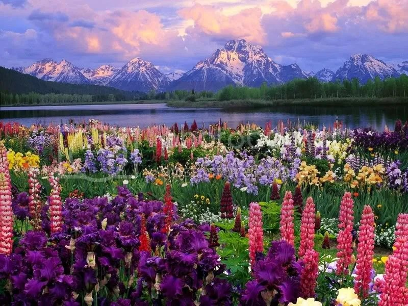 God's beauty photo:  FieldOfFlowers.jpg