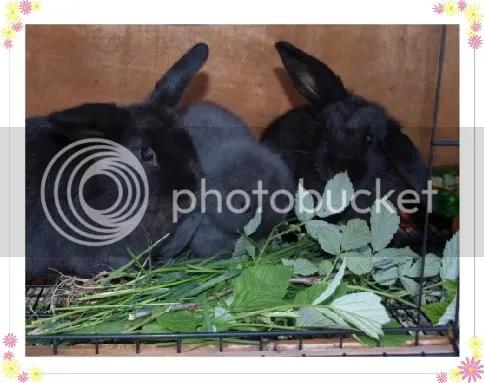kaninene.jpg picture by jeameen