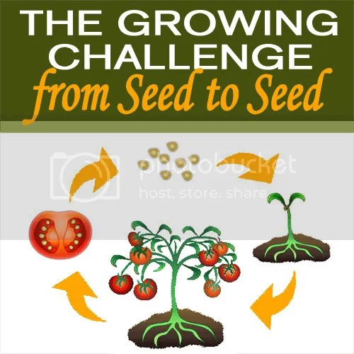 Seed to Seed Challenge