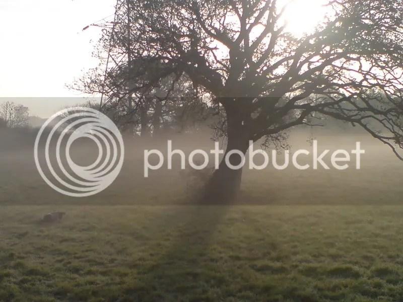 mists photo: mists DSC00171.jpg