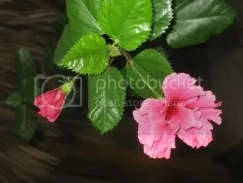 A flower from our garden at the Luna Blue Hotel & Garden
