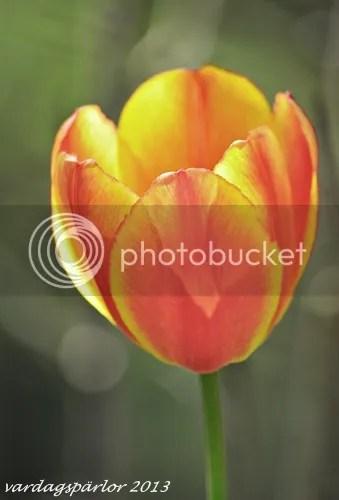 photo DSC_0066_zps647f7b97.jpg