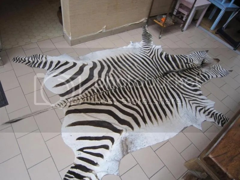 peau zebre hartmann NaturaBuy photo Authentique-peau-zebre-Hartmann_zps87493e80.jpeg