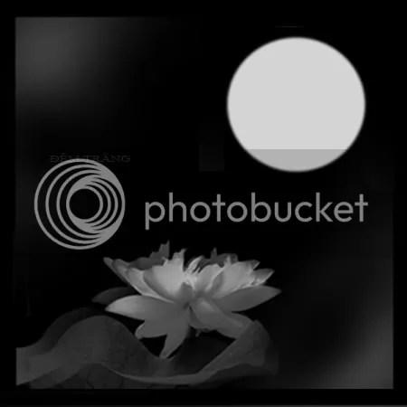 https://i0.wp.com/i86.photobucket.com/albums/k88/suonglam_2006/MCTN%20ORTB/demtrang.jpg