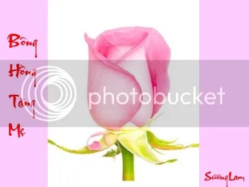 https://i0.wp.com/i86.photobucket.com/albums/k88/suonglam_2006/NgayCuaMe/Bonghangtangme2dep.jpg