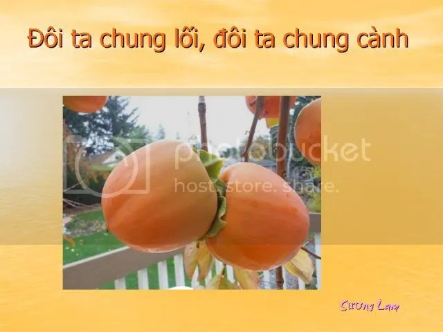 https://i0.wp.com/i86.photobucket.com/albums/k88/suonglam_2006/SinhnhatSuongLam/Slide2.jpg