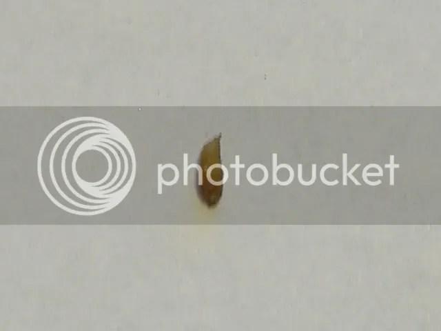 Tiny White Worms Crawling On Aquarium Glass | Allcanwear org