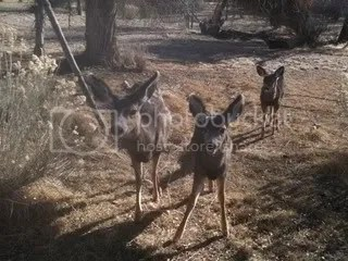 Fawns are Curious