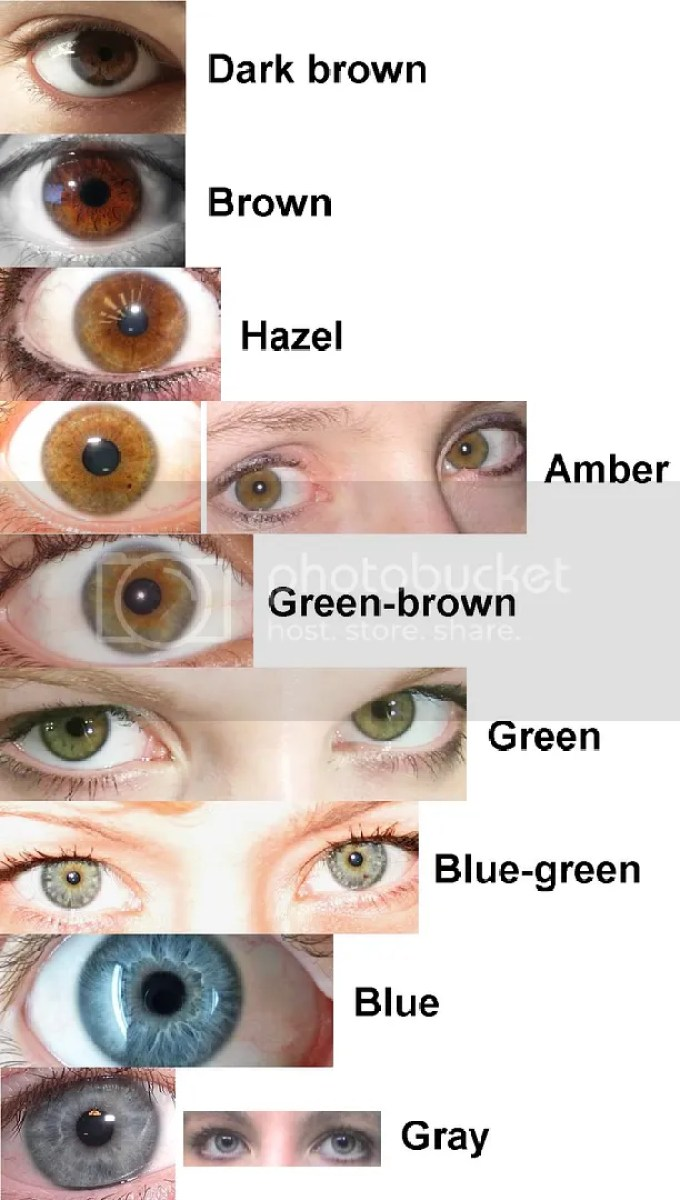 Human eye color chart hazel hairsstyles light brown eye color chart 62 best eyes and iridology images on nvjuhfo Image collections