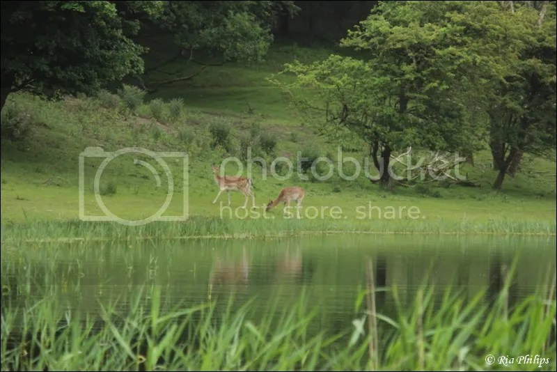 photo IMG_4382.jpg