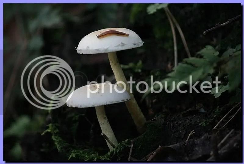 IMG_1790.jpg picture by Schipbeek