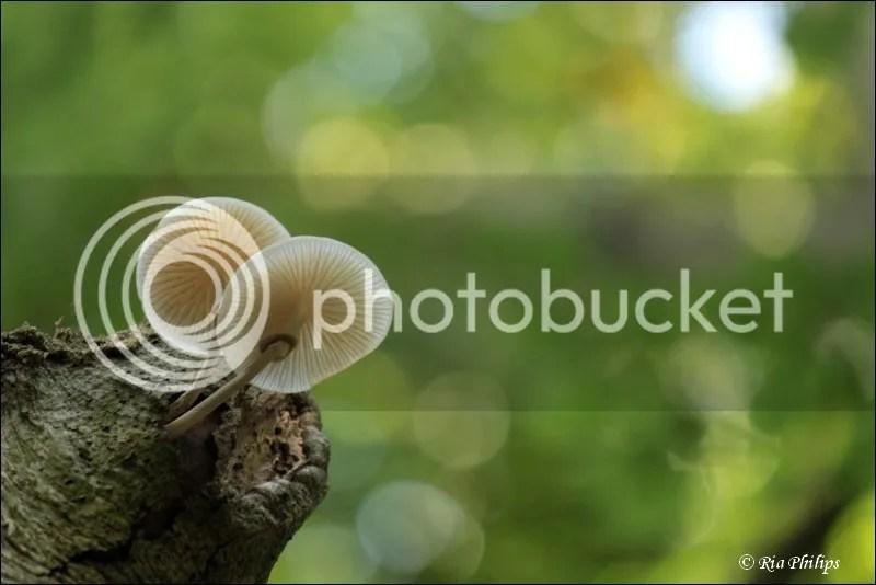 photo IMG_7467.jpg
