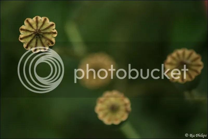 photo IMG_3605.jpg