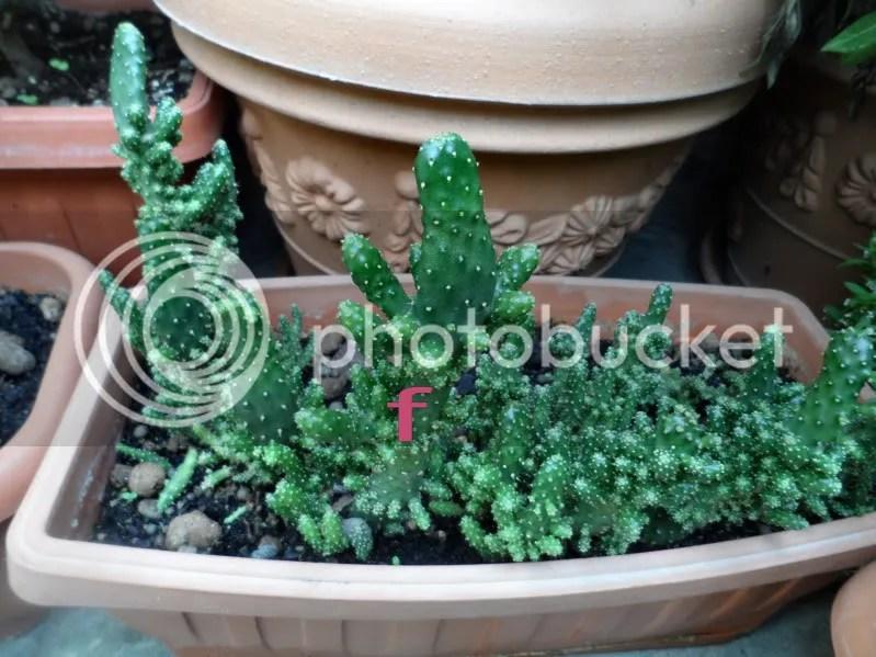 Identificazione di piante grasse  Forum Giardinaggio