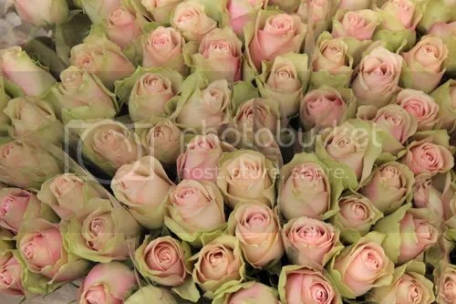 Colombia Road Flower Market 11
