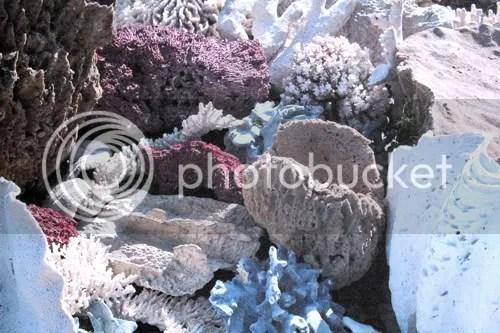 Selfridges Project Ocean 1