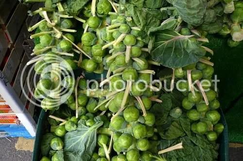 Borough Sprouts 2