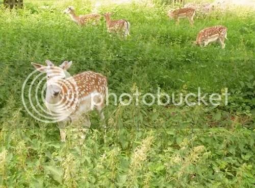 deer park 4