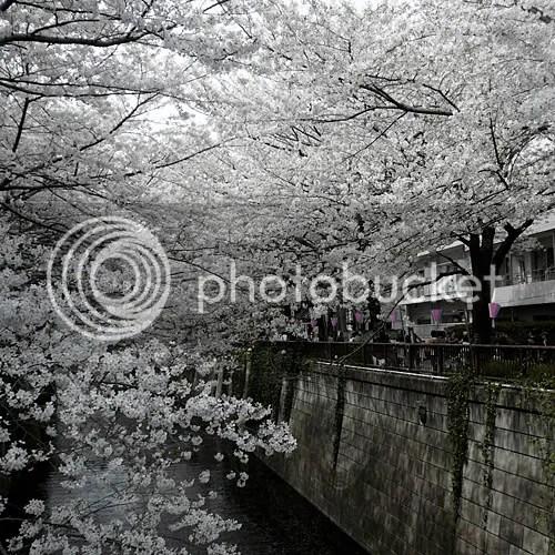 fusako sakura nakame