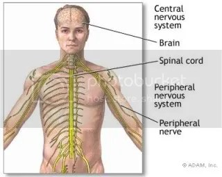 Targetted Central Nervous System cultivation is the key to success