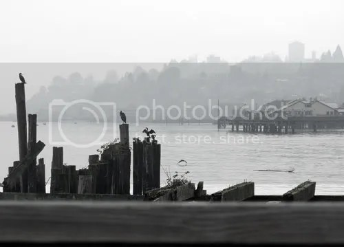 Misty morning on the waterfront