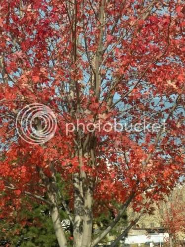 stubborn leaves hanging on